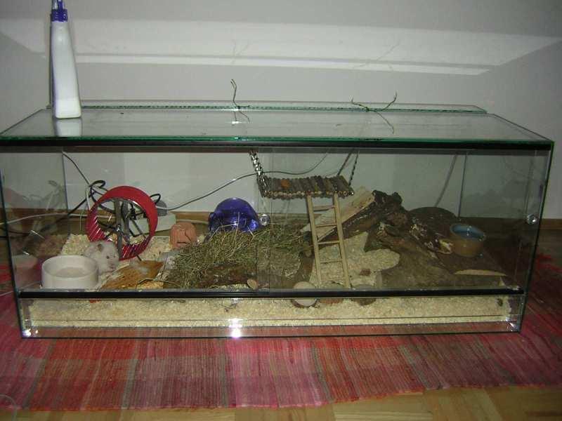 hamster isst wurm