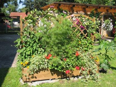 sichtschutz im reihenhausgarten, hecke? - seite 1 - gartenpraxis, Garten und Bauen