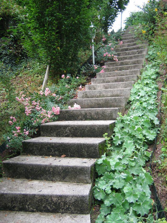Garten am steilhang - Winterbepflanzung fur balkonkasten und kubel garten ...