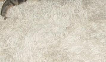 wenn die katze durchfall hat und der hund auf den teppich kotzt. Black Bedroom Furniture Sets. Home Design Ideas
