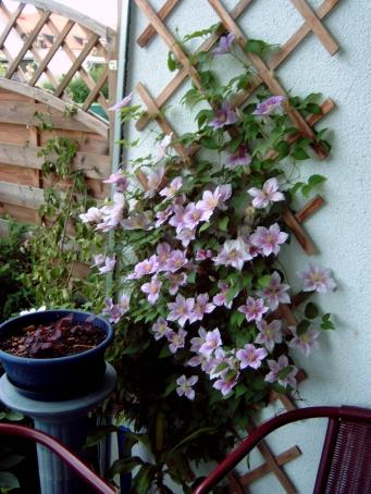 Balkongestaltung Ideen Gesucht - Seite 1 - Gartenpraxis - Mein ... Ideen Balkongestaltung Pflanzen
