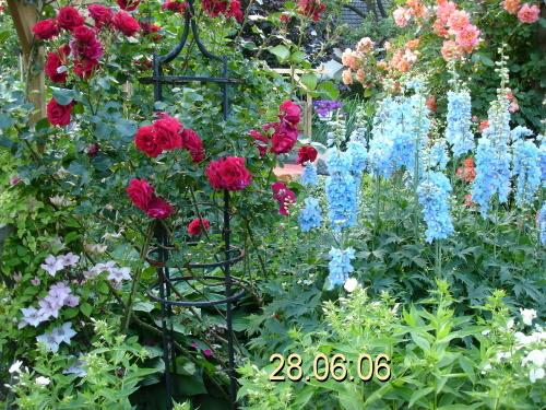 meine rosen wie immer einfach sch n seite 29 rund um die rose mein sch ner garten online. Black Bedroom Furniture Sets. Home Design Ideas