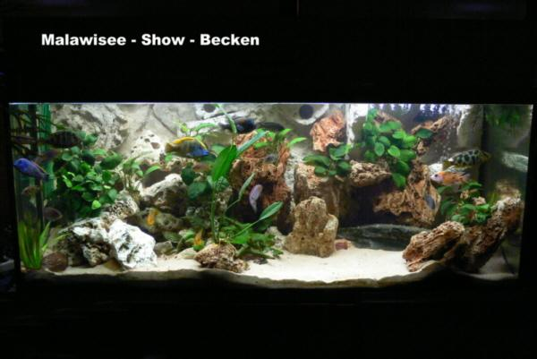Malawisee show becken