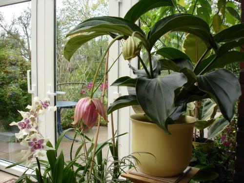 zimmerpflanzen im winter rosen und mehr mein sch ner. Black Bedroom Furniture Sets. Home Design Ideas