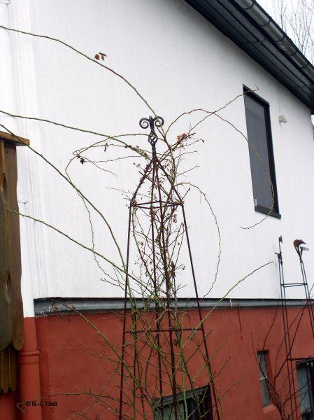 suche obelisk f r kletterrosen mein sch ner garten forum. Black Bedroom Furniture Sets. Home Design Ideas