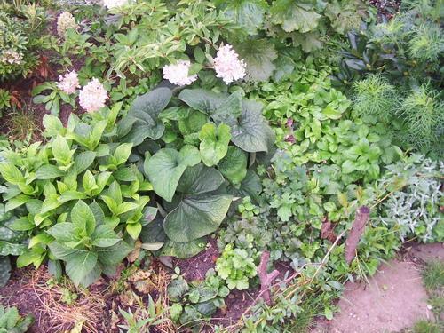 suche begleitpflanzen zu bauernhortensien mein sch ner garten forum. Black Bedroom Furniture Sets. Home Design Ideas