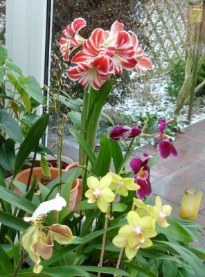amaryllis rosen und mehr mein sch ner garten online. Black Bedroom Furniture Sets. Home Design Ideas