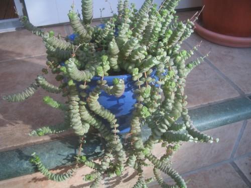 Zimmerpflanzen ohne namen wer kennt sie