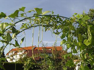 Rosenbogen bepflanzung seite 1 gartengestaltung mein for Gartengestaltung rosenbogen
