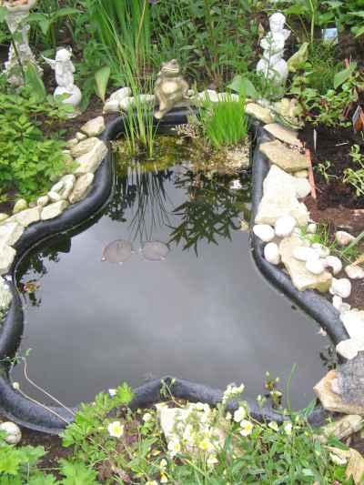 Teichumrandung Mein Schöner Garten Forum