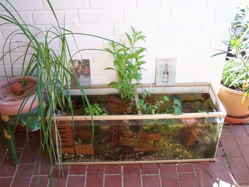 Bepflanzung kleiner teich mein sch ner garten forum for Miniteich mit fischen anlegen