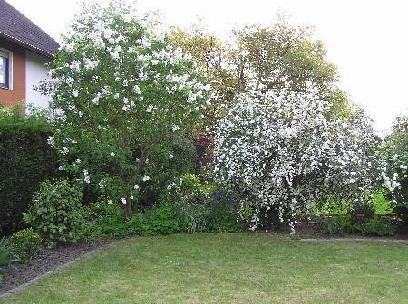 unser garten im april rosen und mehr mein sch ner. Black Bedroom Furniture Sets. Home Design Ideas