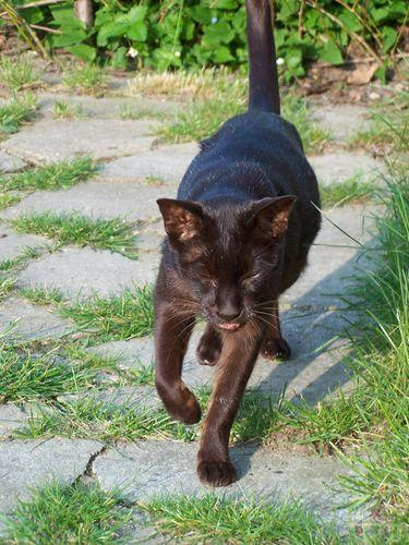 alterserscheinungen bei katzen