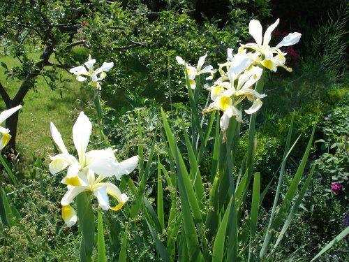 Gartentagebuch im Juni 1.Teil - Mein schöner Garten Forum