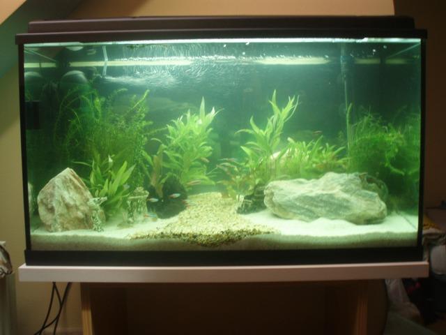 Fisch eier an der aquariumwand seite 4 for Aquarium goldfische
