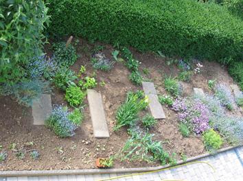 Blumenbeet neu gestalten seite 1 gartenfreunde mein for Blumenbeet neu gestalten pflanzen