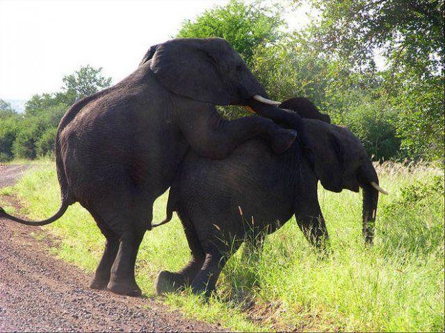 Hayvanların Çiftleşmesi Canlı