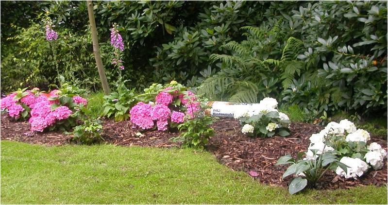 Umgestaltung einer Gartenecke - Seite 2 - Gartengestaltung ...