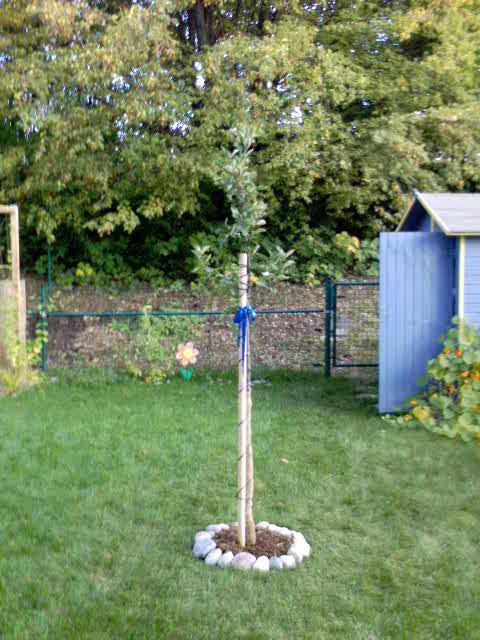 darf ich vorstellen mein kleiner apfelbaum mein sch ner garten forum. Black Bedroom Furniture Sets. Home Design Ideas