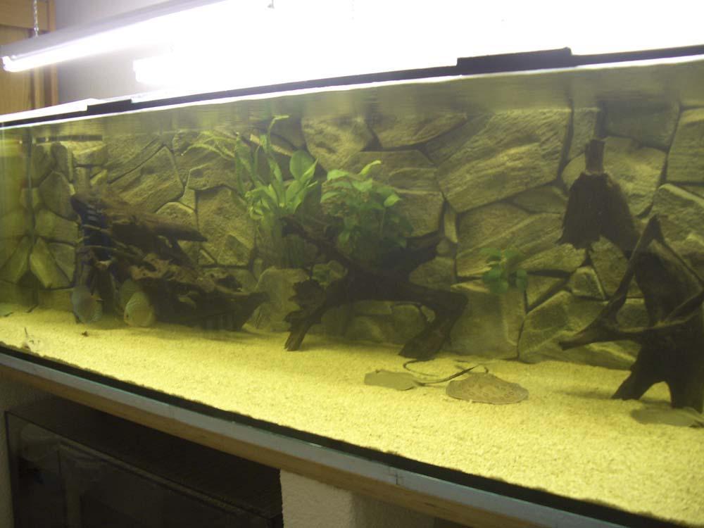 Mein 2100 liter aquarium mit rochen und diskus for Diskus aquarium