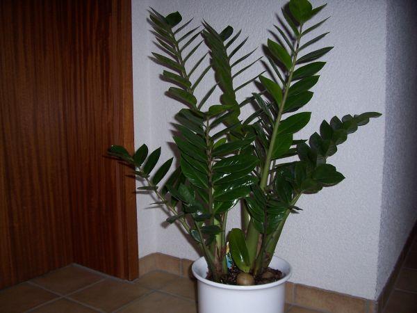 schwarze fecken an pflanzen