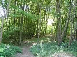 Pluckley village Aw4ottlbrp12gckd0