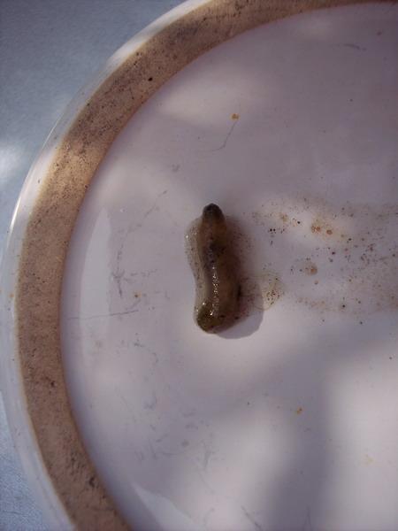 Was f r larven im teich seite 1 gartenpraxis mein for Larven im teich