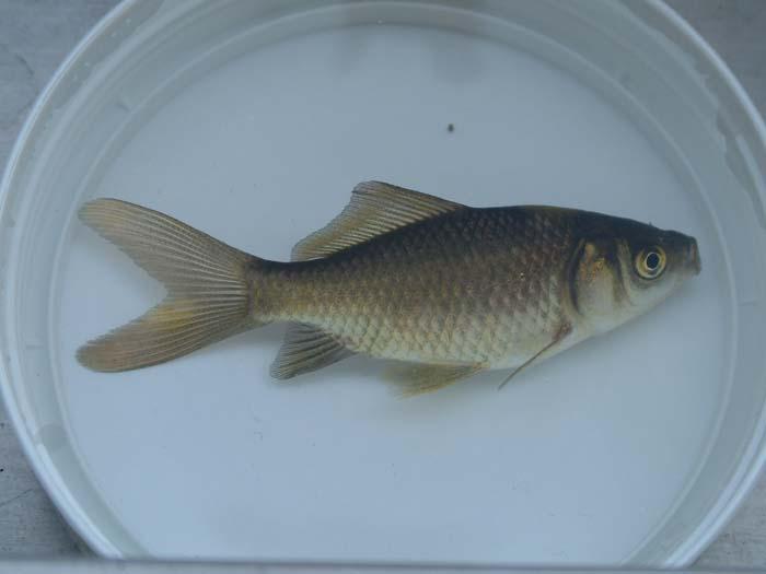 Wer Kennt Diesen Fisch Mein Schoner Garten Forum