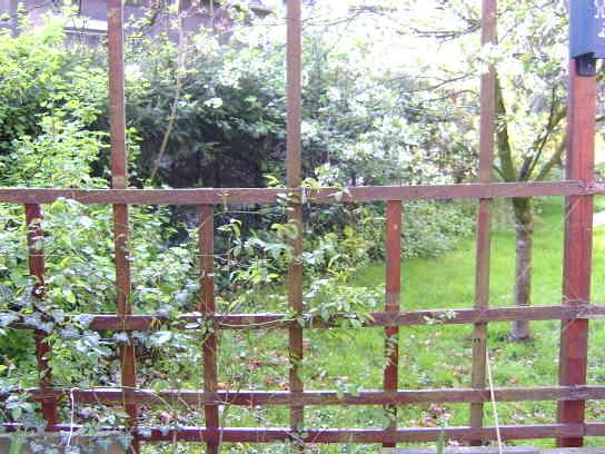 reihenhausgarten trennung zum nachbarn mein sch ner