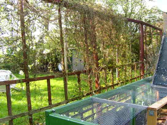Reihenhausgarten trennung zum nachbarn mein sch ner for Gartengestaltung abgrenzung zum nachbarn