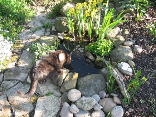 Miniteich Im Mortelkubel Seite 2 Teich Brunnen Schlauch Co
