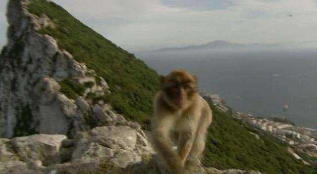 Der Herr der Affen von Gibraltar