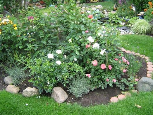 Gartentagebuch im juni page 3 mein sch ner garten forum - Rosenbeet ideen ...