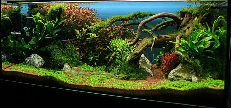 unsere zwei : Aquarienvorstellungen - Aquascaping - Aquarium ...