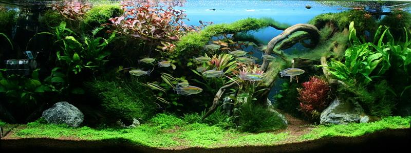 unsere zwei aquarienvorstellungen aquascaping aquarium wasserpflanzen flowgrow. Black Bedroom Furniture Sets. Home Design Ideas