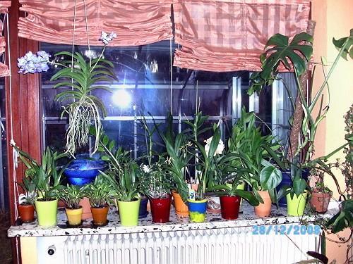 pflege blaue vanda orchidee mein sch ner garten forum. Black Bedroom Furniture Sets. Home Design Ideas