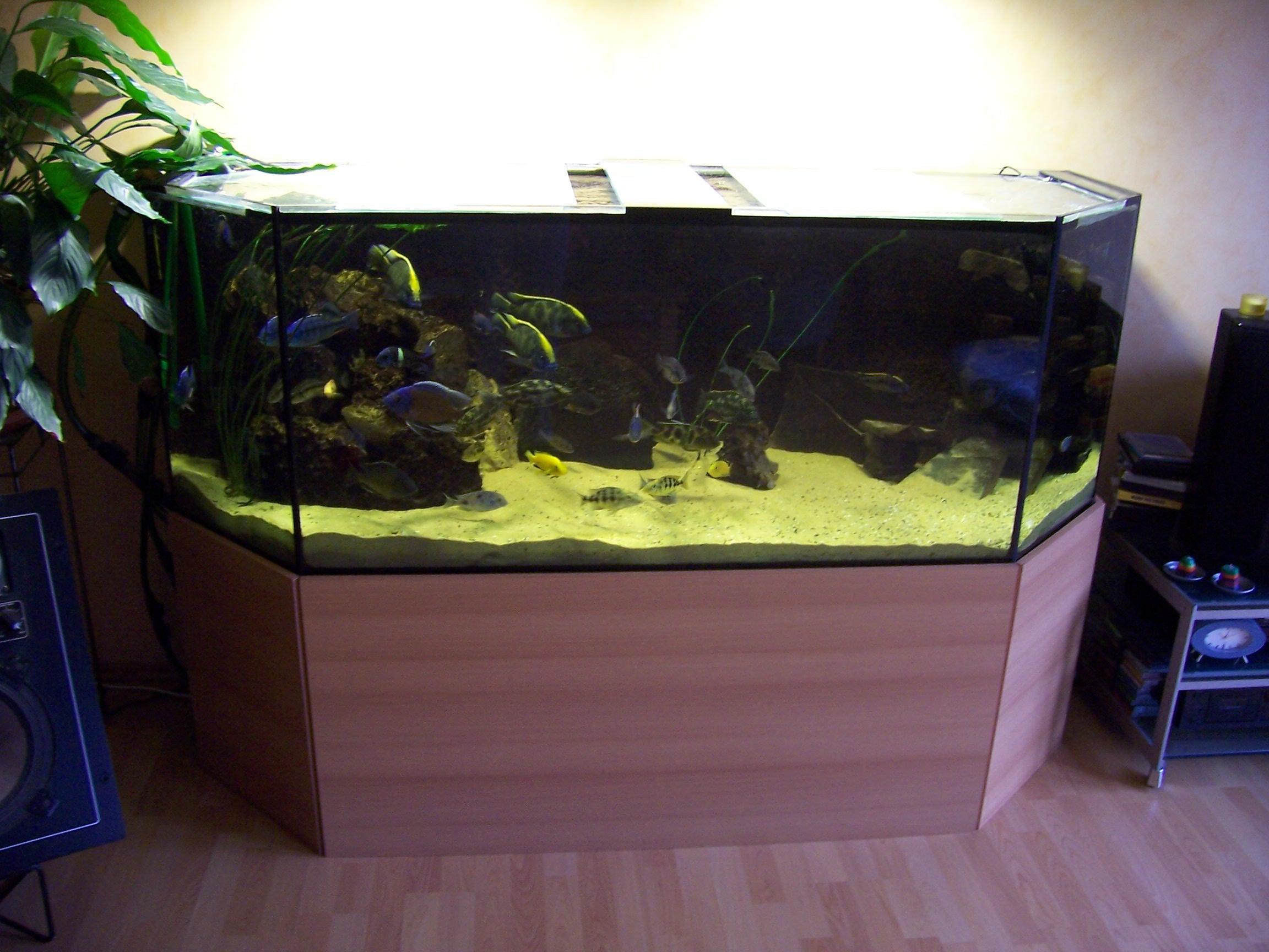 53501 800 liter sechseck aquarium zu verkaufen bieten. Black Bedroom Furniture Sets. Home Design Ideas