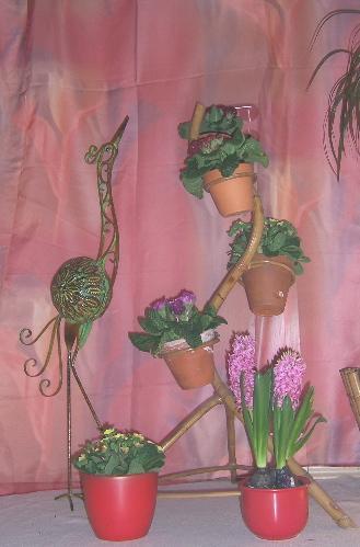 Die Paradiesv Gel Im Februar Mein Sch Ner Garten Forum