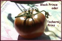 riesen tomate baumtomate
