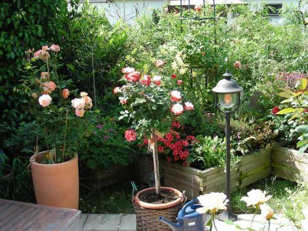 welche rosen eignen sich zur k belhaltung auf der terrasse und wie gro die k bel dann mein. Black Bedroom Furniture Sets. Home Design Ideas