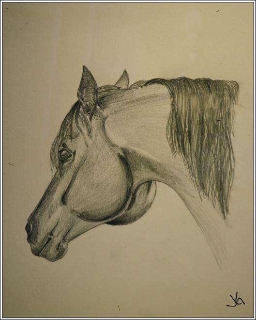 Pferdeportrait Mit Bleistift Gegen Bilderklau Das Original