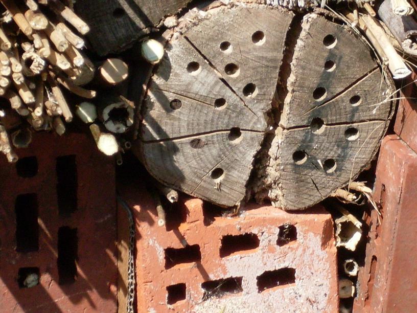 kraut r ben forum tinas insektenhotel zimmer frei. Black Bedroom Furniture Sets. Home Design Ideas
