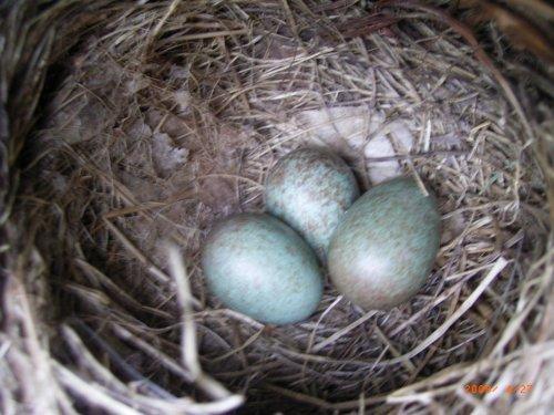 Anleitung Eier Abbinden