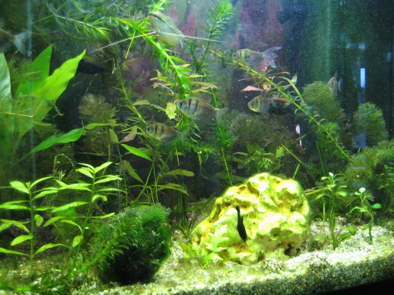 forum wasserchemie algen nix als algen immer wieder. Black Bedroom Furniture Sets. Home Design Ideas