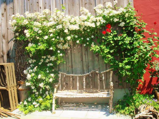 Hässliche Wand Verdecken was habt ihr aus euren hässlichsten gartenecken gemacht mein schöner garten forum