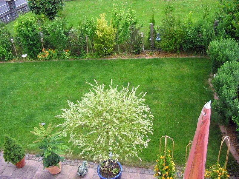 Rasen entfernen und neu anlegen mein sch ner garten forum for Gartengestaltung neubau