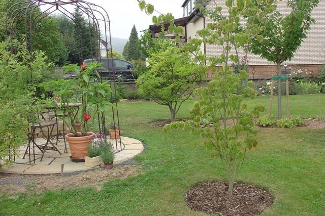 magnolie zeigt komische knospen seite 1 pflanzendoktor. Black Bedroom Furniture Sets. Home Design Ideas