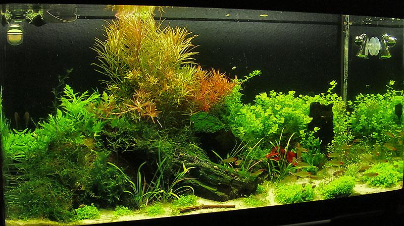 schwarze aquarium folie