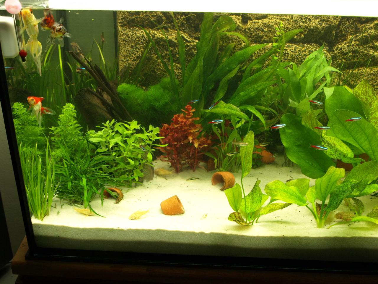 easy life pro fito carbo dosierung aquarium forum. Black Bedroom Furniture Sets. Home Design Ideas