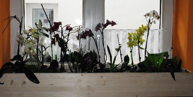fensterbankschale selber fertigen seite 2 orchideenforum. Black Bedroom Furniture Sets. Home Design Ideas